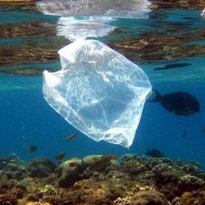 bolsas plasticas (2)