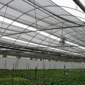 plasticos para invernadero (6)