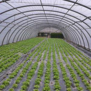 plasticos para invernadero (8)