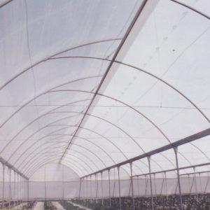 plasticos para invernadero (9)